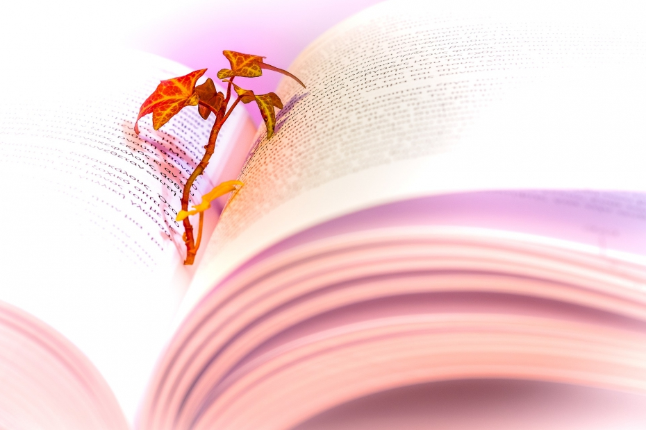 Leaf In A Book